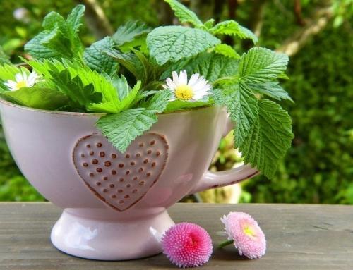 Naravno razstrupljanje jeter s spomladanskimi rastlinami