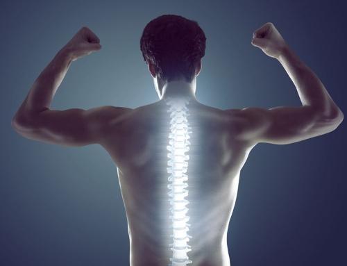 Mali vodnik skozi bolečine v hrbtu, sklepih in mišicah