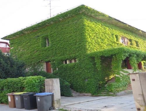 Zelena fasada