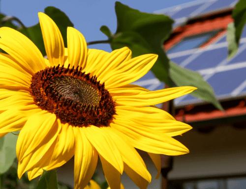 Sončna elektrarna – donosna naložba!